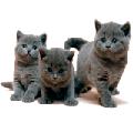 Раскраски Кошки да котята