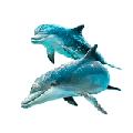Раскраски Дельфин