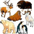 Раскраски Дикие животные