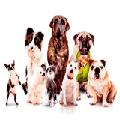 Раскраски Собаки равно щенки