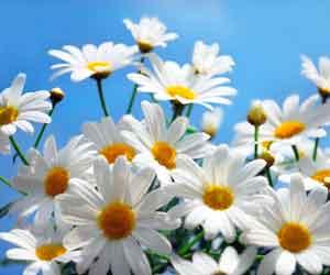 цветы и птицы раскраски