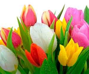 цветок ромашка раскраска