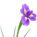 раскраски цветов