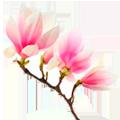 раскраски цветок