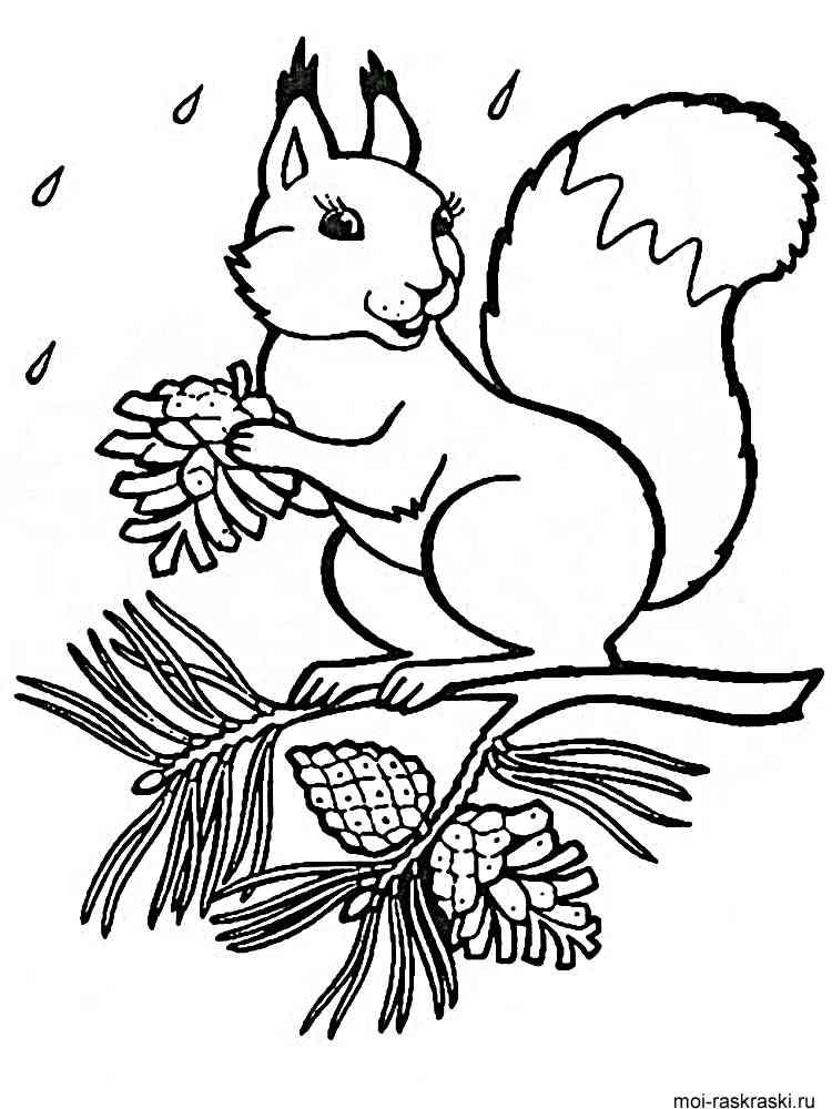 Картинка Белка Раскраска Для Детей