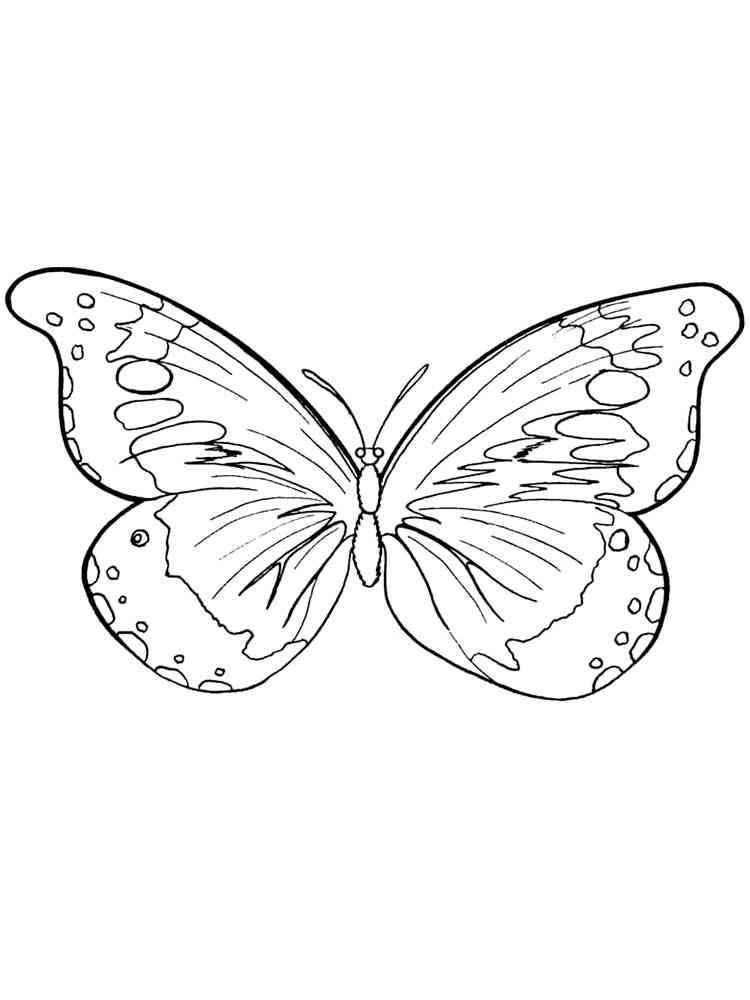 раскраски бабочки скачать и распечатать раскраски бабочек