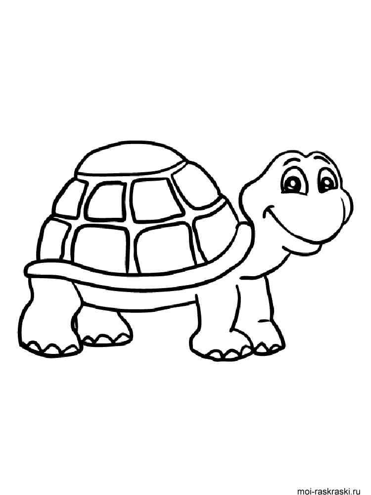 Раскраски Черепаха - распечатать в формате А4