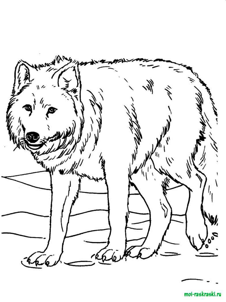 arctic wolf coloring pages - photo#34