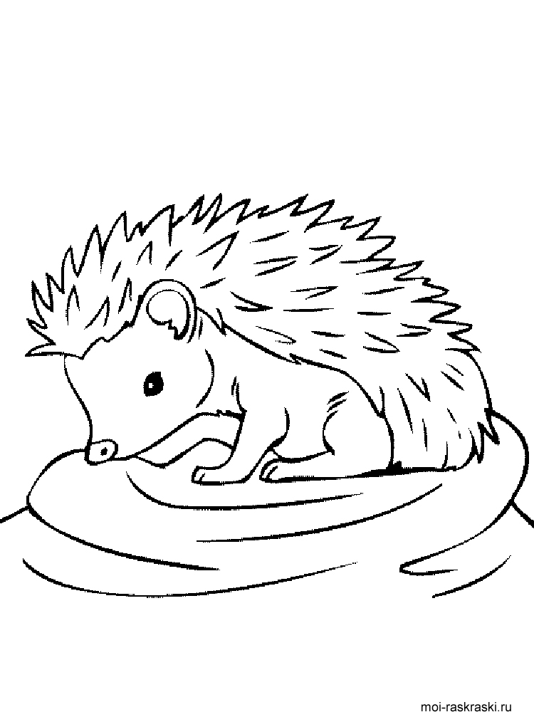 Amazoncom Hedgehog Coloring Book for Adults Animal