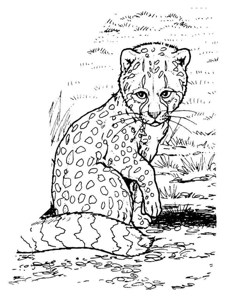 Раскраски гепарда распечатать