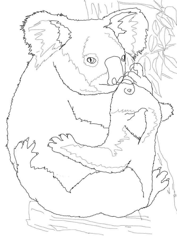 Распечатать раскраски коалы