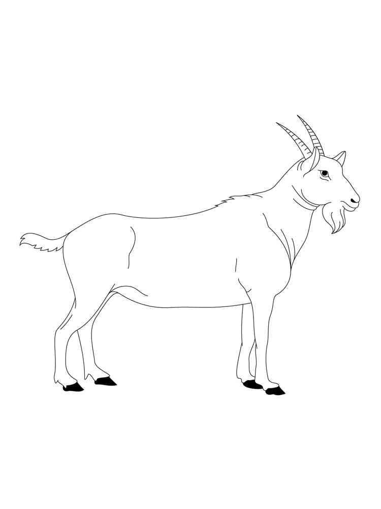 Раскраски Коза - распечатать в формате А4