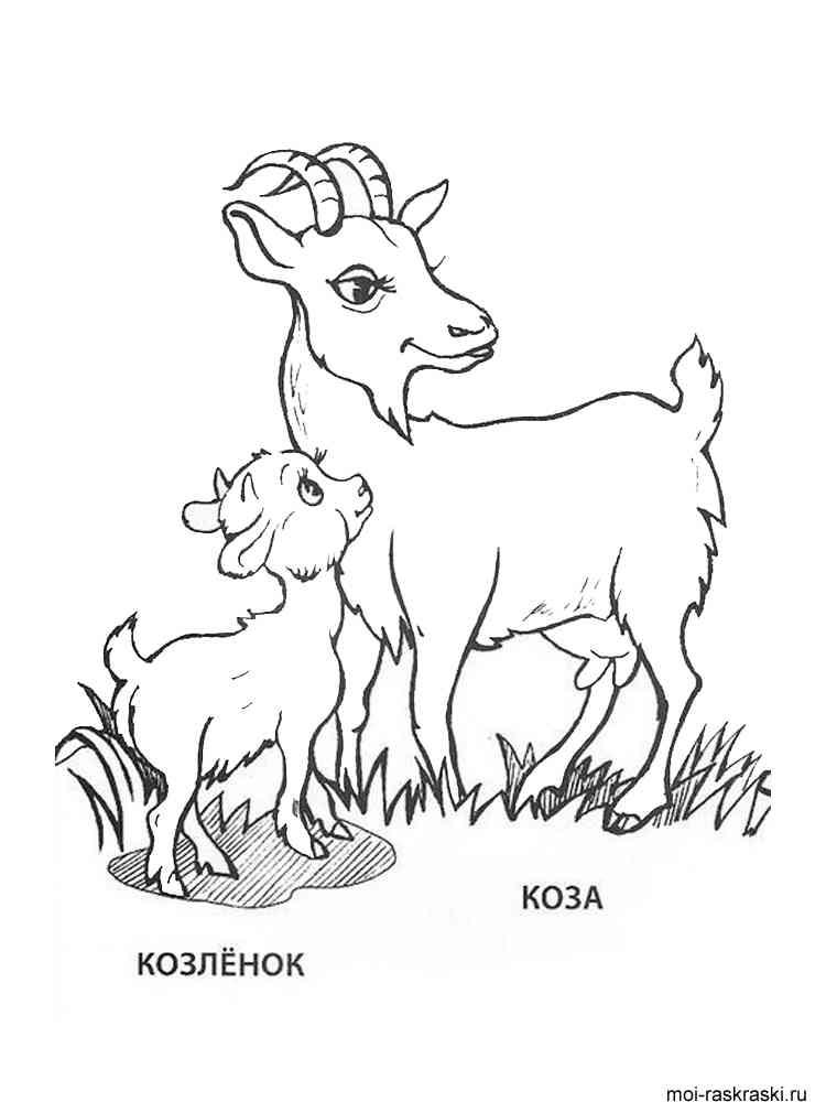 Раскраски животных и детёнышей