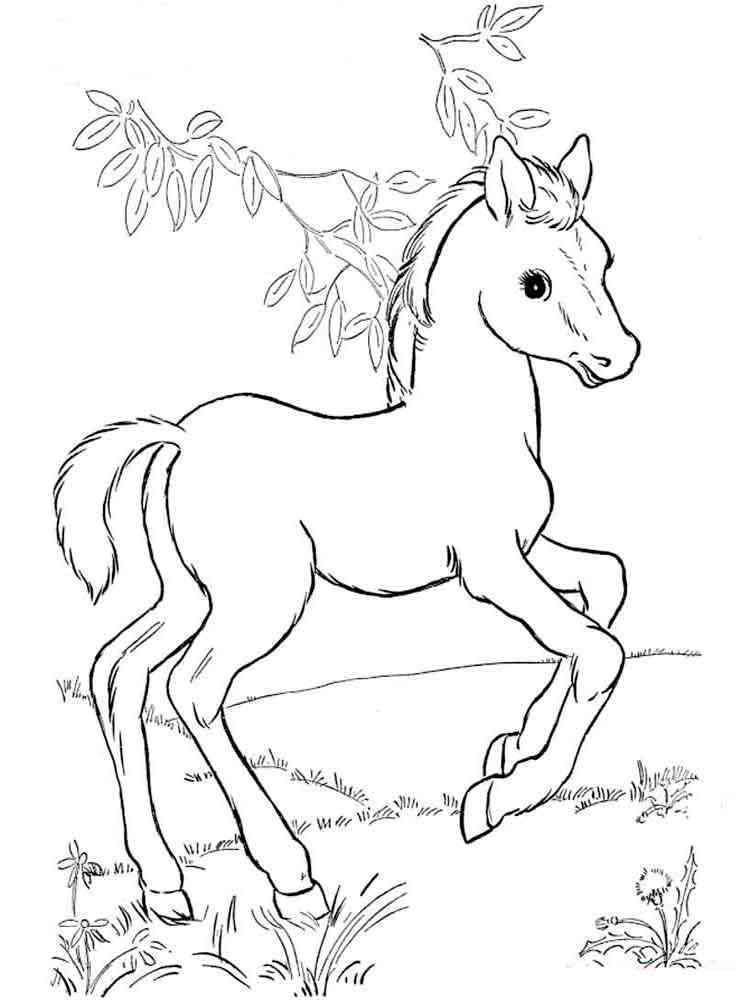 Раскраска для девочек лошадки распечатать - 9