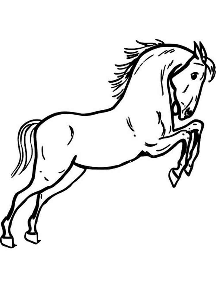 Horse show jumping drawing