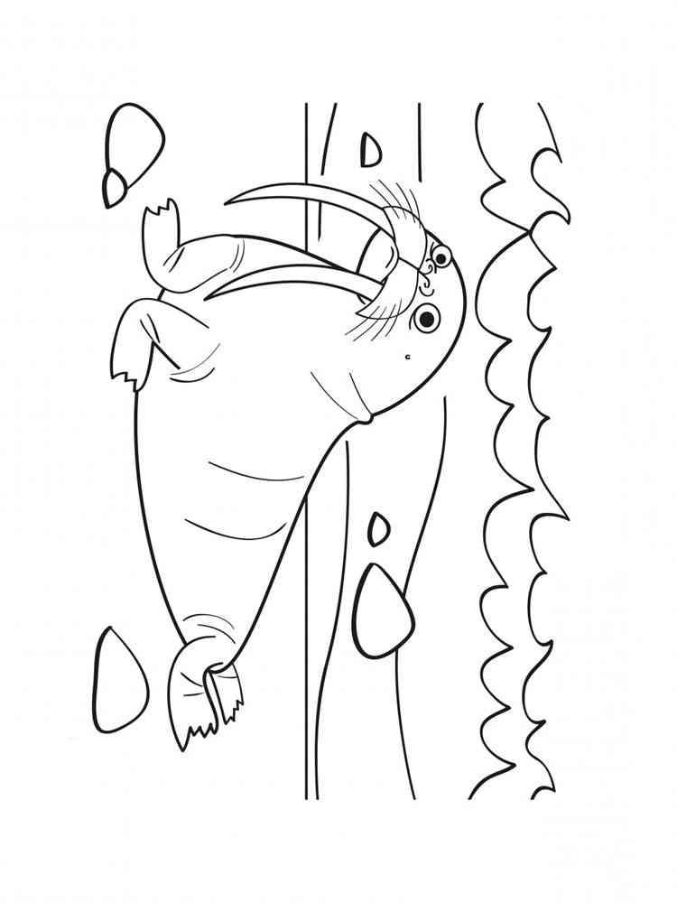 раскраски морж скачать и распечатать раскраски морж