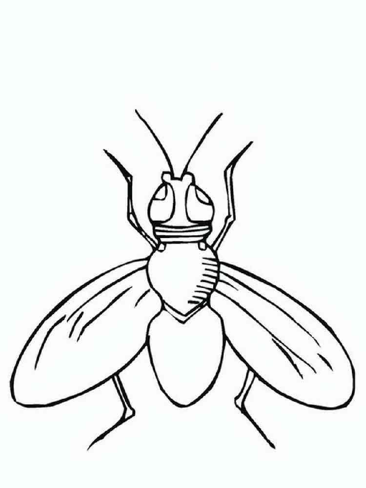 раскраска муха скачать и распечатать раскраски муха