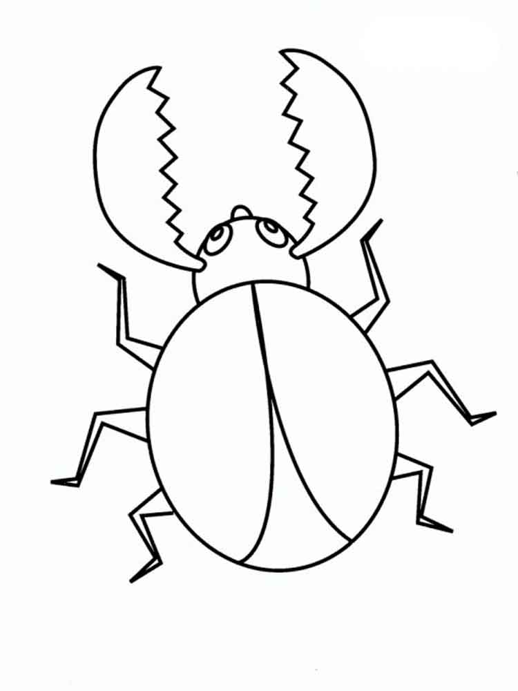 раскраска жуки скачать и распечатать раскраски жуки