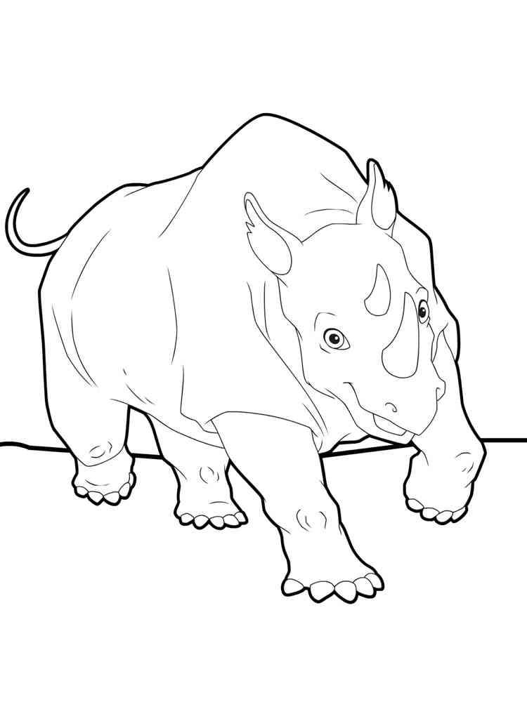 детские раскраски носорог скачать и распечатать раскраски