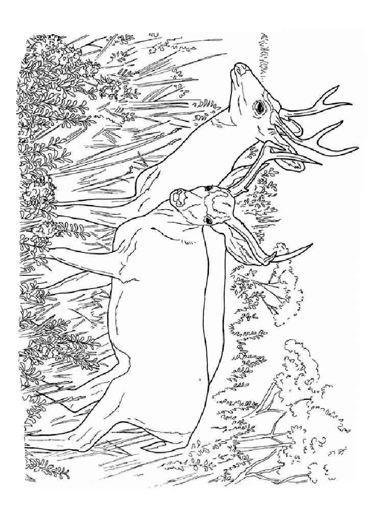 Раскраски Олень - распечатать в формате А4