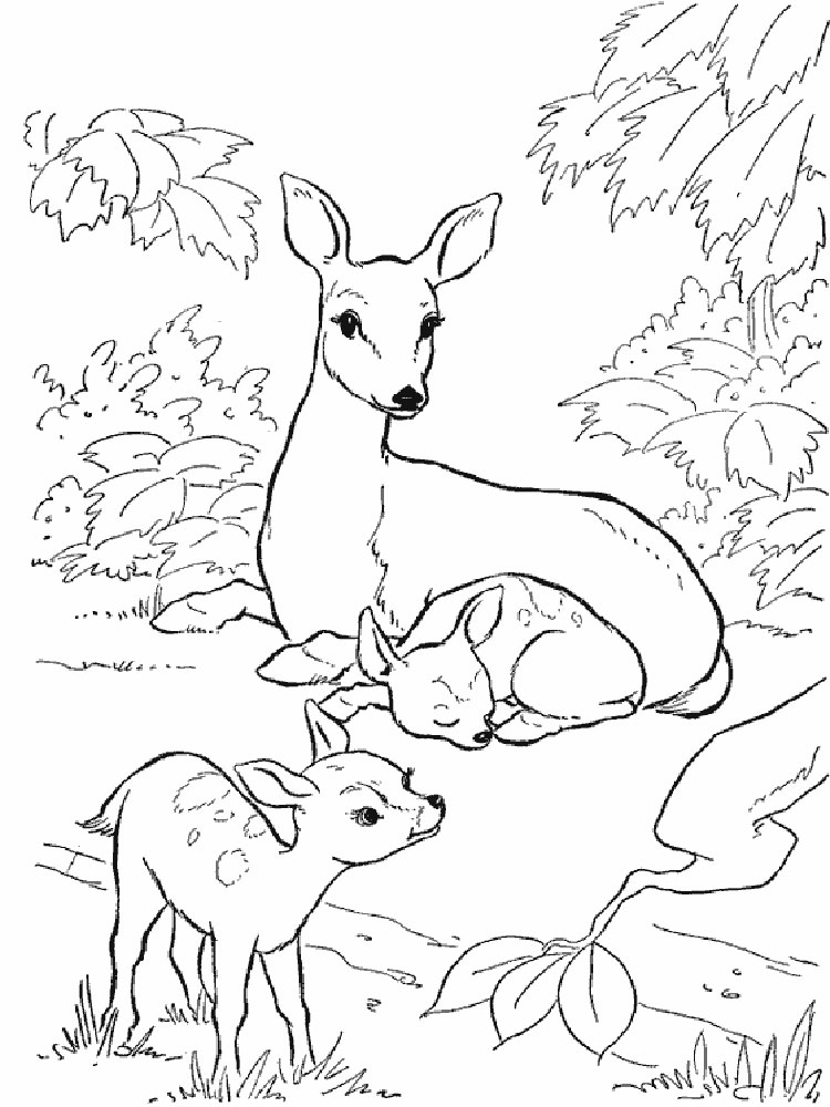 Раскраски о дикой природе