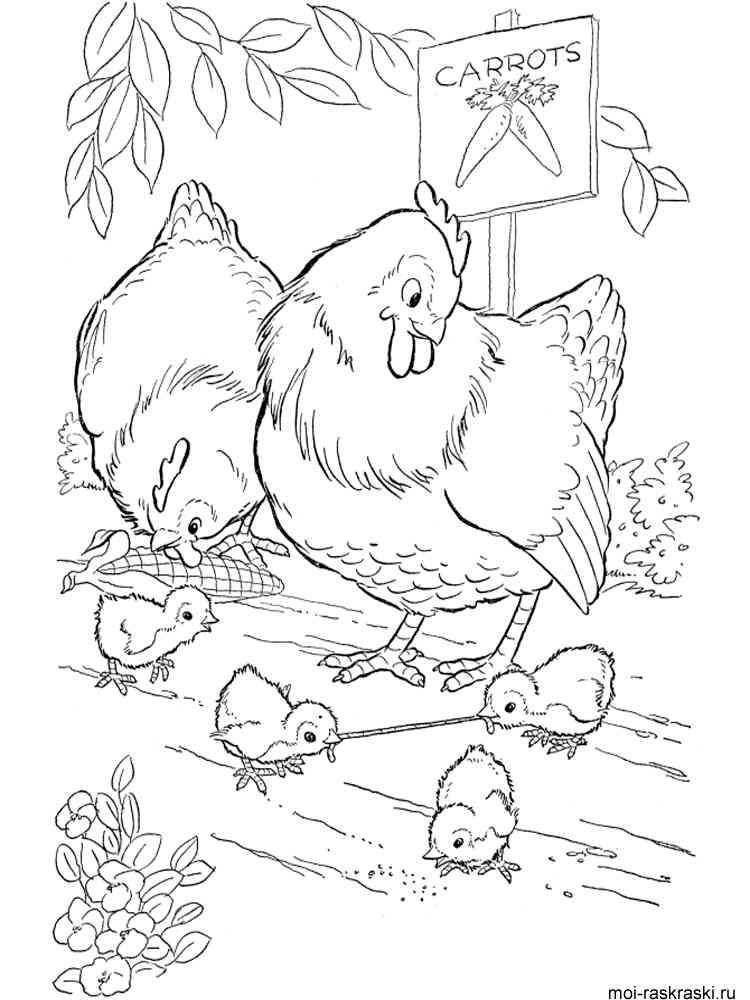 Раскраска петух курица цыплята 105