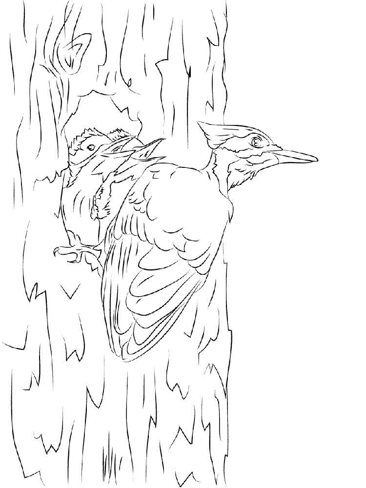 12 Woodpecker Coloring Pages For Kids Print Color Craft