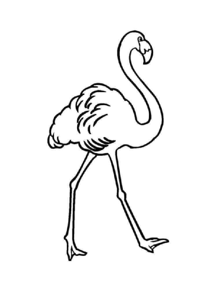 Раскраска от фламинго