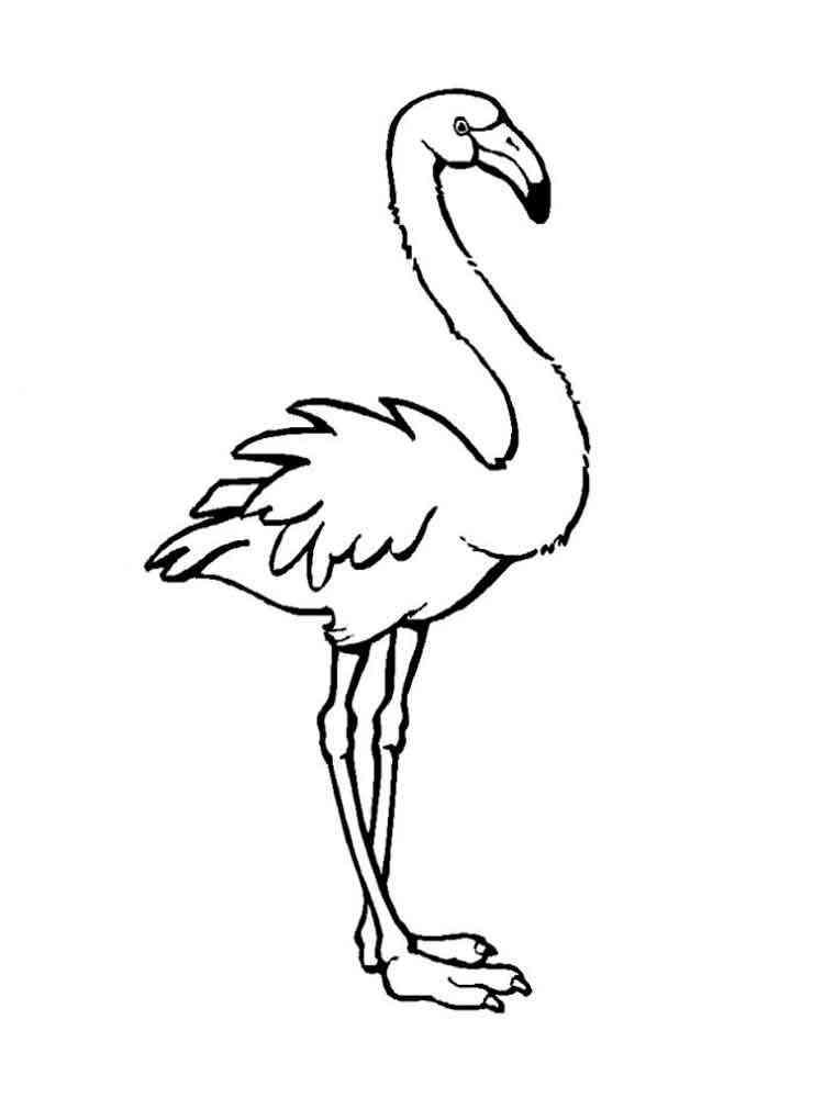 раскраска фламинго скачать и распечатать раскраски фламинго