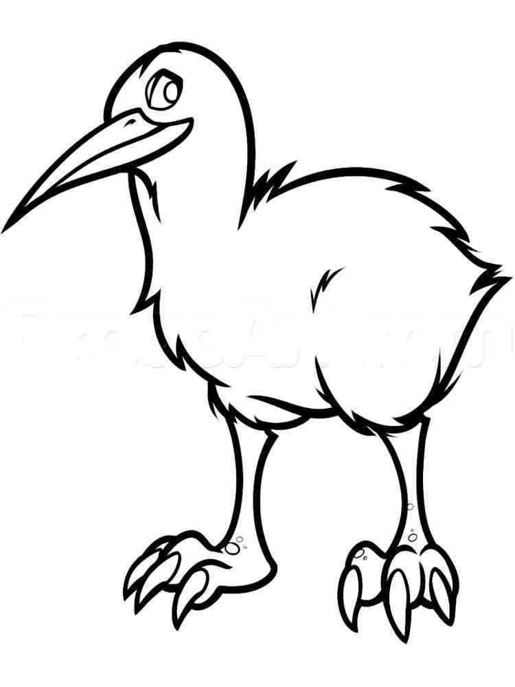раскраска птица киви скачать и распечатать раскраски птица киви