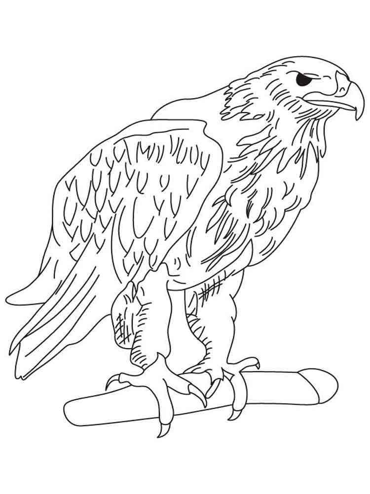 Распечатать раскраску орел
