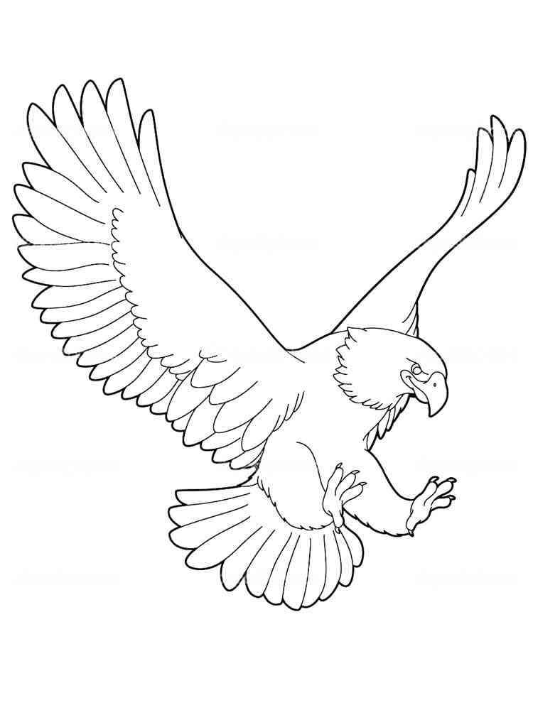 Орёл картинки раскраски