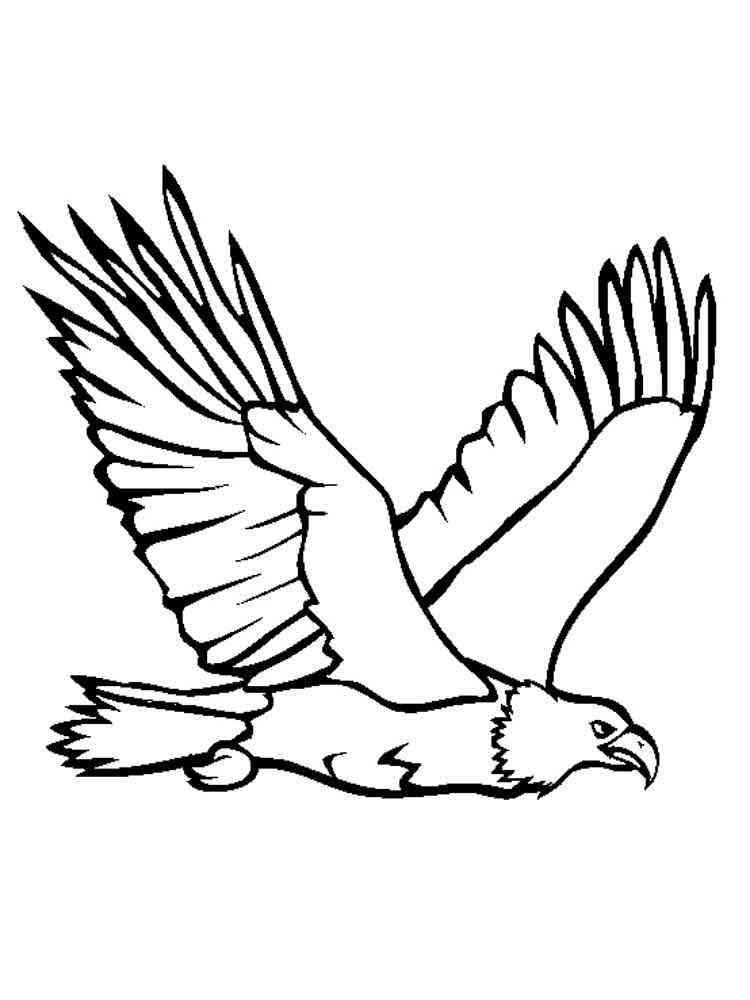 Раскраска Орел  распечатать в формате А4