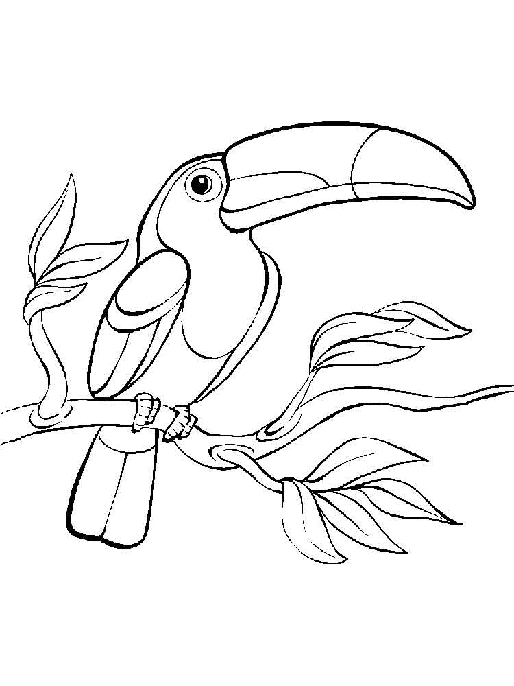91 amazon rainforest coloring pages toucan bird dinocroinfo