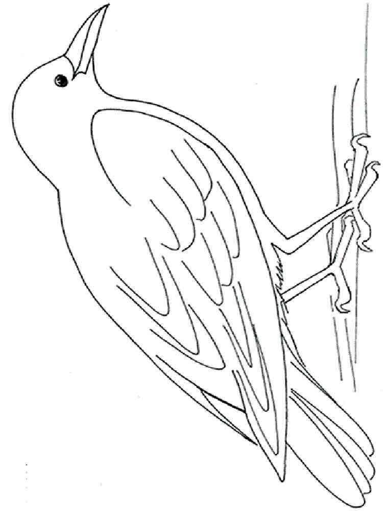 Ворона раскраски