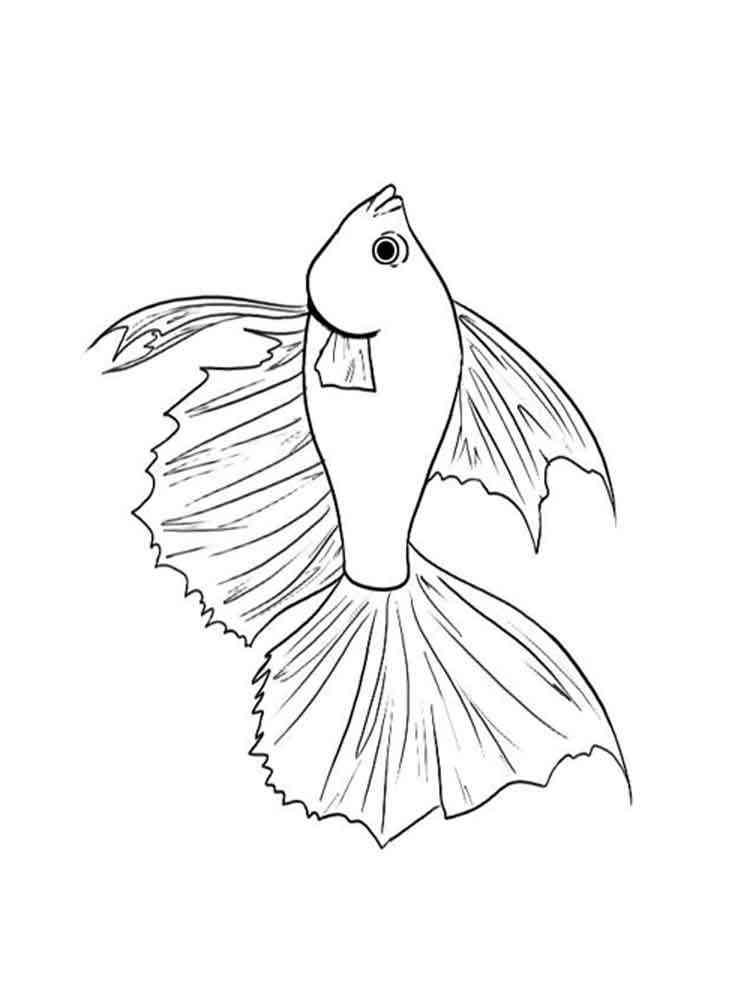 Рыба петух нарисованная