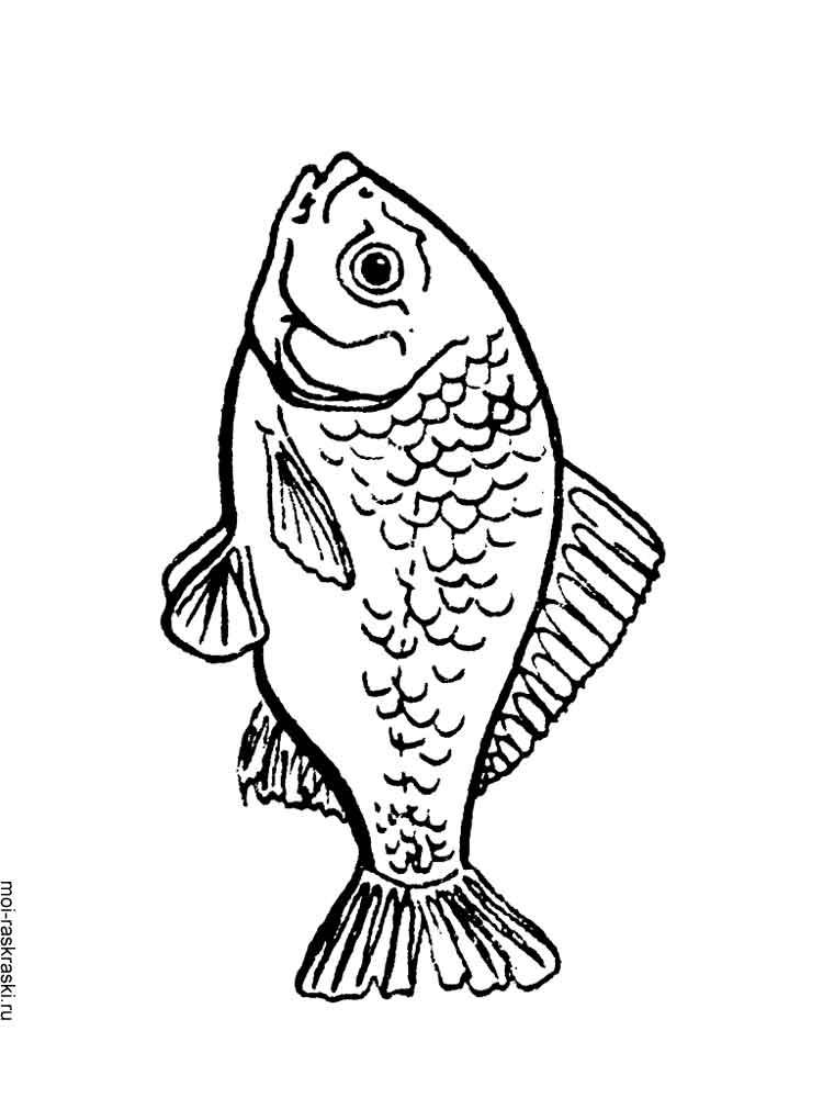 раскраска рыба карась скачать и распечатать раскраски рыба