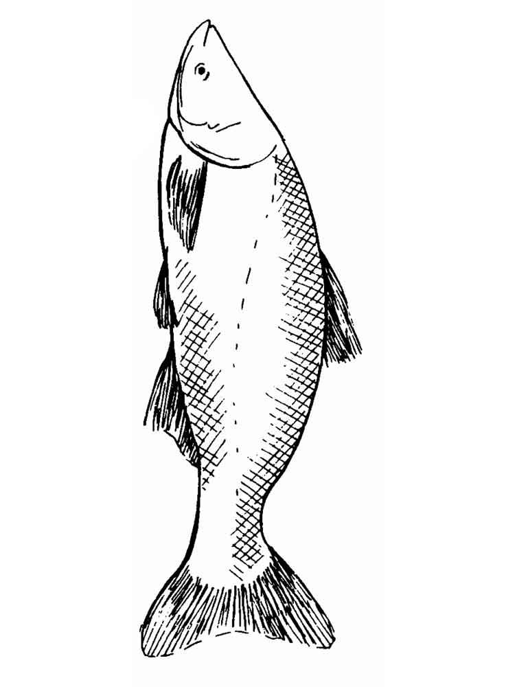 Раскраска рыба Карп - распечатать в формате А4