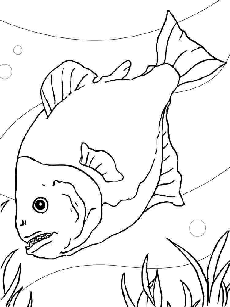 Раскраска рыба Пиранья - распечатать в формате А4