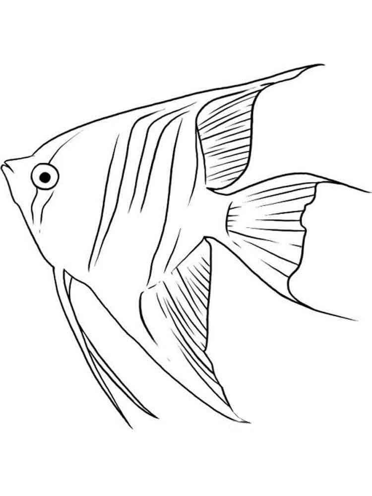 раскраска рыба ангел скачать и распечатать раскраски рыба