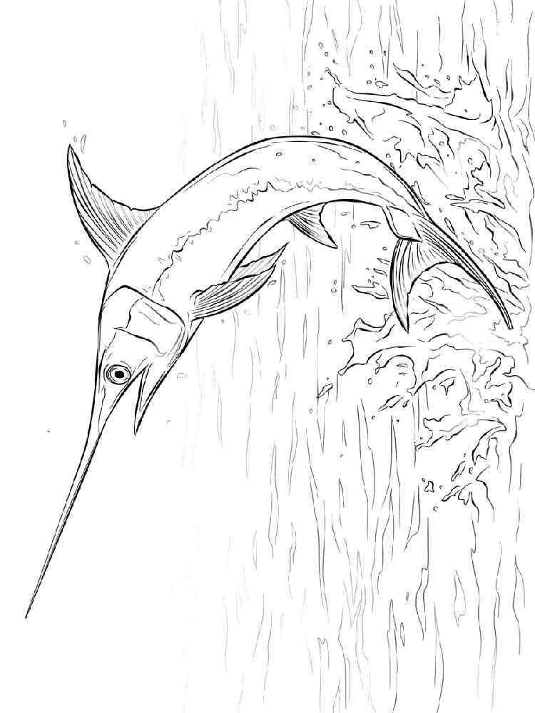 раскраска рыба меч скачать и распечатать раскраски рыба меч