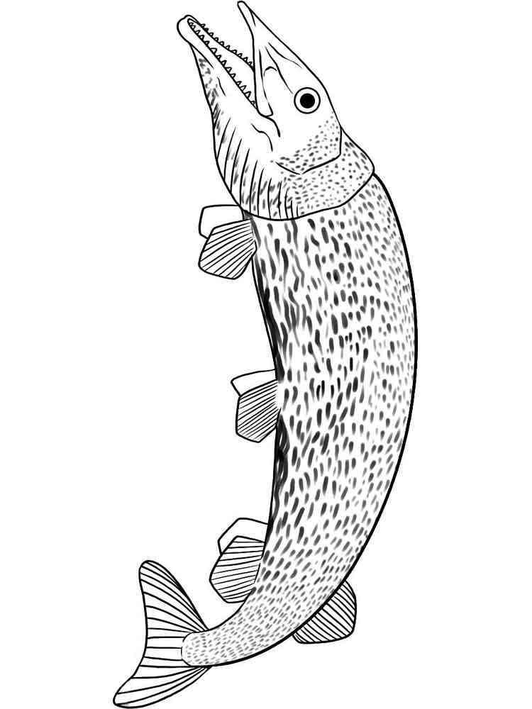 Раскраска рыба Щука - распечатать в формате А4