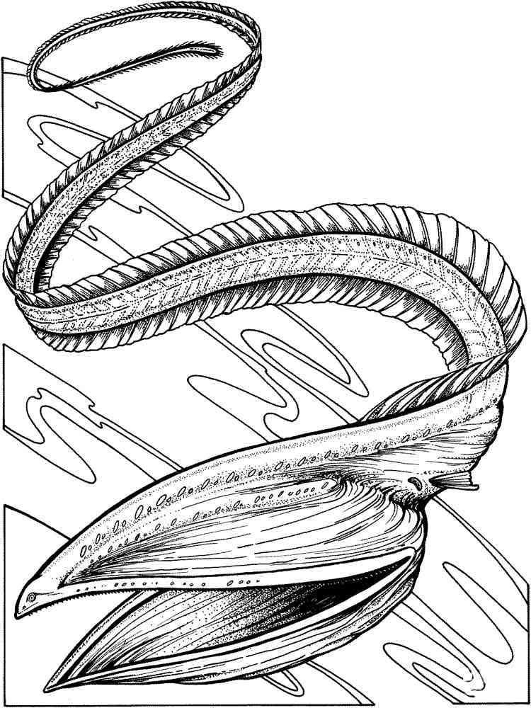 Раскраска рыба Угорь - распечатать в формате А4