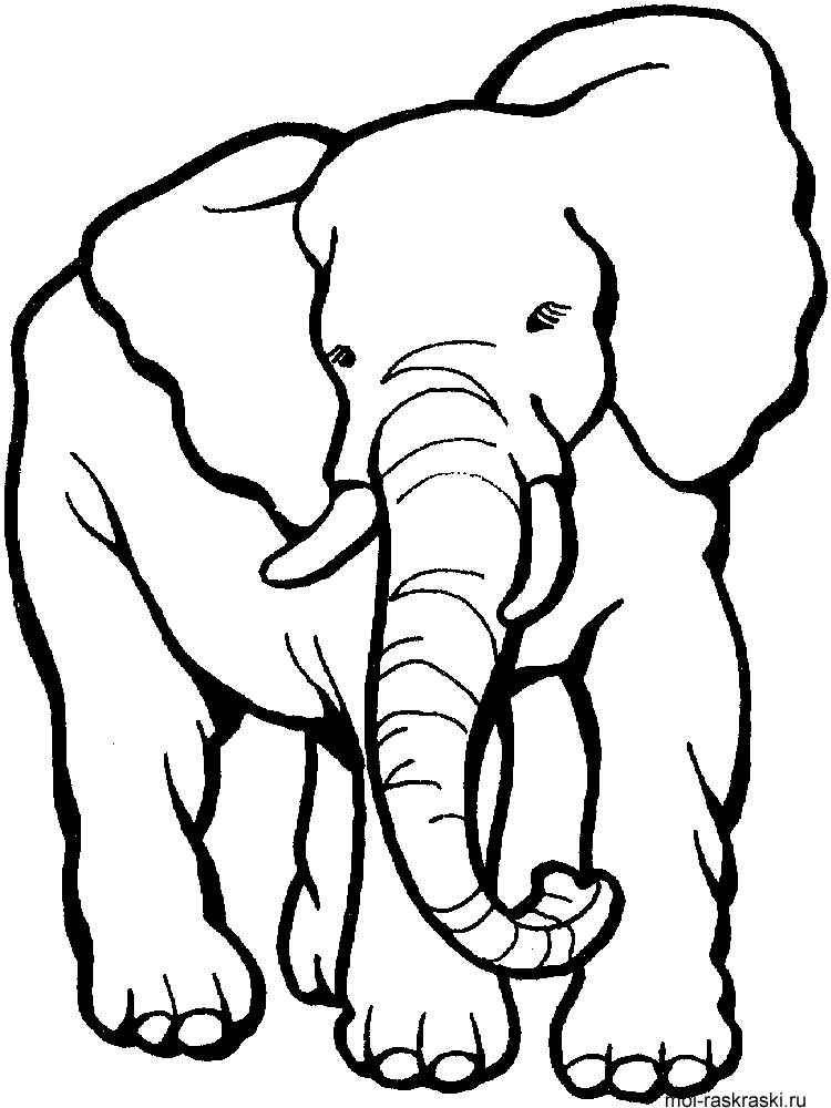 Раскраски для детей слон - 3