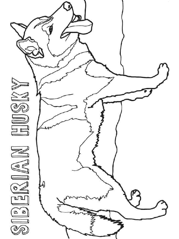 Раскраски Хаски - распечатать в формате А4
