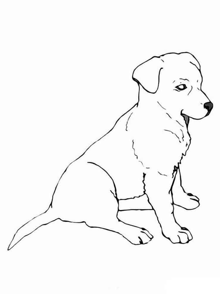 Раскраски собаки. Скачать и распечатать раскраски Собак