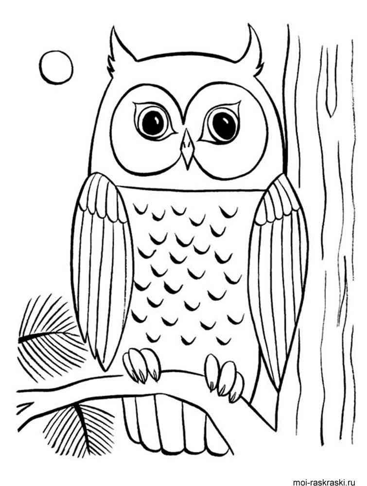 раскраски картинки совы