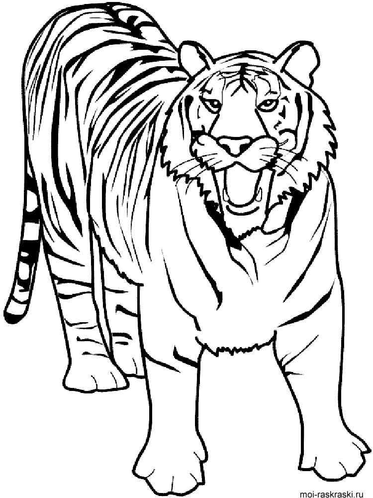 Кот раскраски как тигр