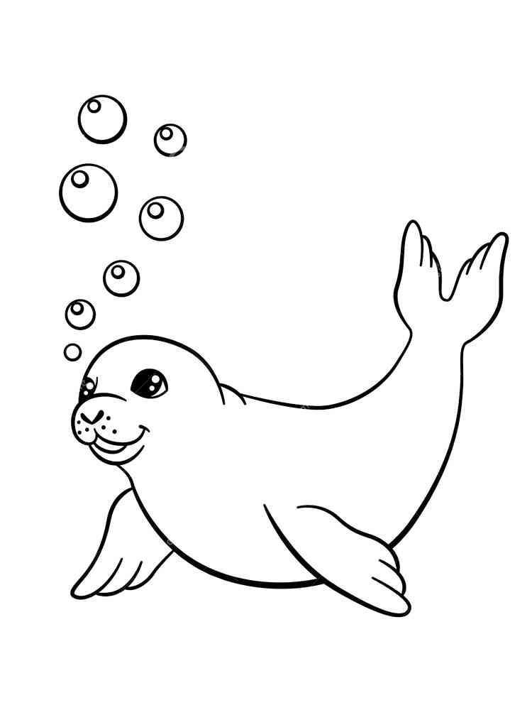 раскраски тюлень скачать и распечатать раскраски тюлень