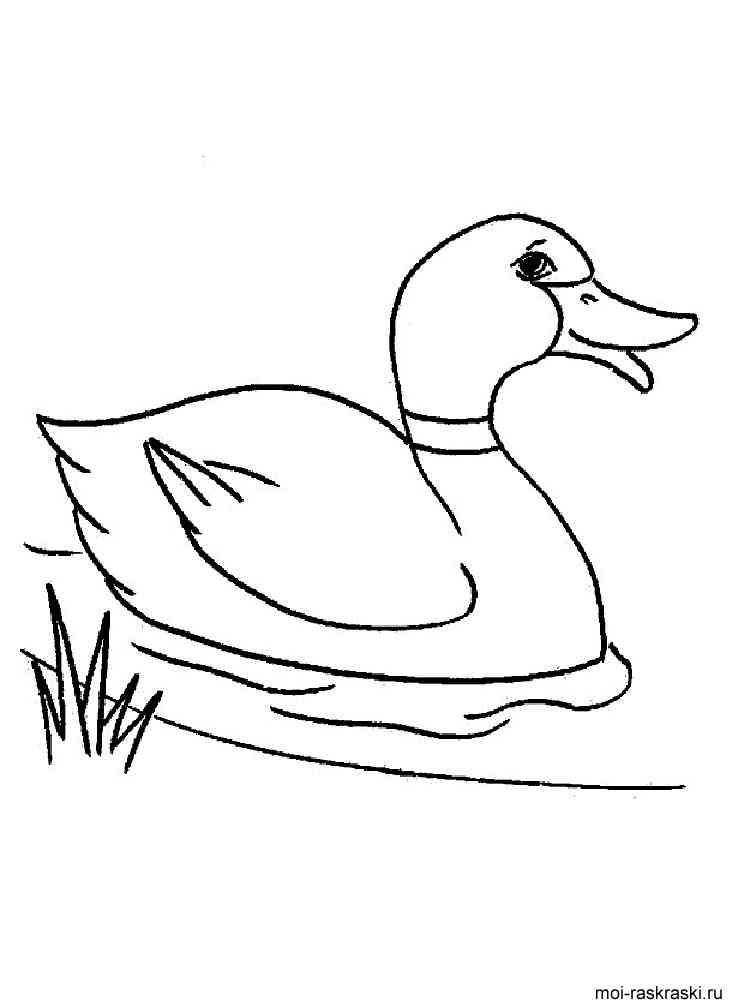 раскраски утка скачать и распечатать раскраски утка